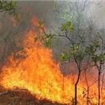 از آتشسوزی عمدی مزارع تا اطفای حریق با بیل!