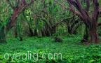 جنگل ارسباران پاکسازی میشود