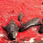 تصاویر/ قتل عامی که دریا را رنگ خون کرد