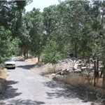 تخریب فضای سبز توسط یک دستگاه دولتی در تبریز+ عکس