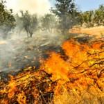 آتش به جان جنگلهای مازندران افتاد