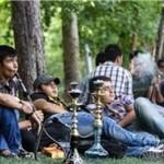 زغالسازی از طبیعت بیخ گوش اداره محیط زیست زنجان