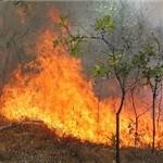 آتشسوزی در جنگلهای ارسباران مهار شد / ۶ هکتار جنگل در آتش سوخت