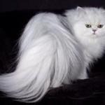 صادرات گربه و سگ از تبریز به کشورهای خارجی