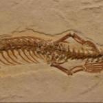 تصاویر/کشف فسیل مار چهار دست و پا