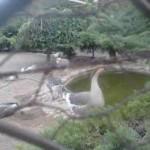 حسینی قمی: حیوانات باغلارباغی در شرایط مطلوبی به سر می برند/ اقدامات اصلاحی در دست اجراست