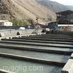 تولید ۵ هزار تن ماهی در آذربایجانشرقی / مصرف سرانه ماهی به ۵٫۵ کیلوگرم رسید