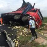 واژگونی کامیونی با ۱۰ هزار جوجه! +تصاویر