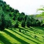 بزرگترین کریدور فضای سبز تبریز احداث میشود