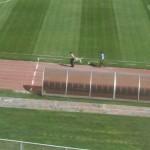 ویدیو/سگ در ورزشگاه یادگار!