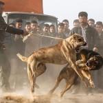 """""""سگ دعوا """"؛نام منطقه ای در ایران!"""