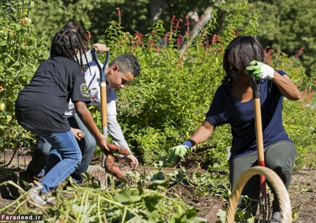 U.S. first lady Michelle Obama picks sweet potatoes with elementary school students during the annual fall harvest of the White House Kitchen Garden in Washington