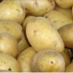 پرداخت یارانه صادرات سیب زمینی به تجار آذبایجان شرقی