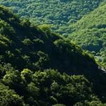 گنج هفت میلیون ساله در اعماق جنگلهای ارسباران/ ارسباران از نظر پوشش گیاهی منحصر بفرد است