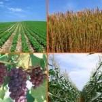 متولی تایید سالم یا ناسالم بودن محصول کشاورزی کیست؟