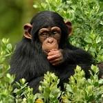 نتایج عجیب مقایسه انسان با حیوانات!