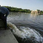 ۱۰ هزار قطعه بچه ماهی کپور در استخر ائل گولی تبریز رهاسازی شد با هدف کاهش میزان جلبک