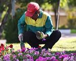 عملیات کاشت انواع بوته گلهای تابستانی در پارک بزرگ ائل گلی آغاز شد