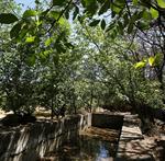 تملک یکی از باغات قدیمی در توسعه فضای سبز مرکز شهر
