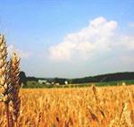 مدیریت صحیح منابع آب و خاک در سایه اصلاح الگوی کشت