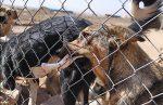 احداث اولین بیمارستان تخصصی حیوانات آسیب دیده و بیپناه