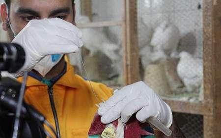 آغاز طرح پایش بیماری آنفلوانزای فوق حاد پرندگان در آذربایجان شرقی